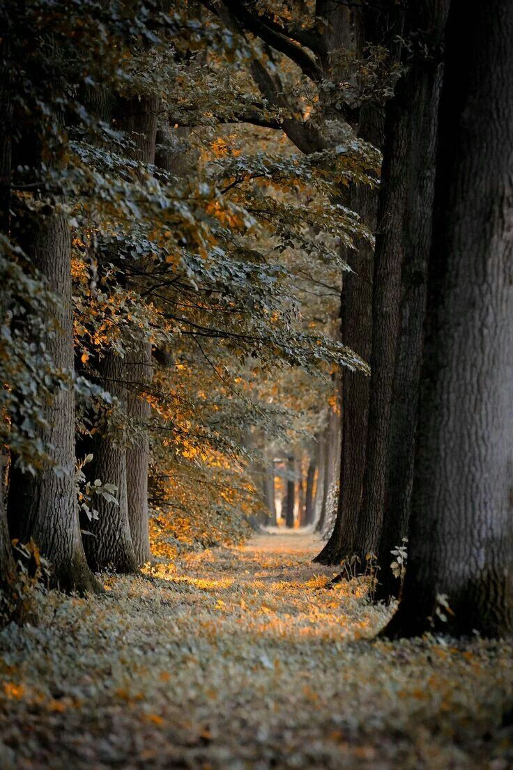 A park path in Autumn. Yorkshire, England