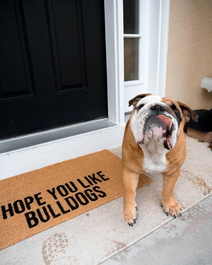 Bulldog Lovers Gift Bulldog Puppies
