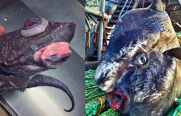 Estos son los monstruos marinos que ha pescado un marinero Ruso - https://infouno.cl/estos-son-los-monstruos-marinos-que-ha-pescado-un-marinero-ruso/