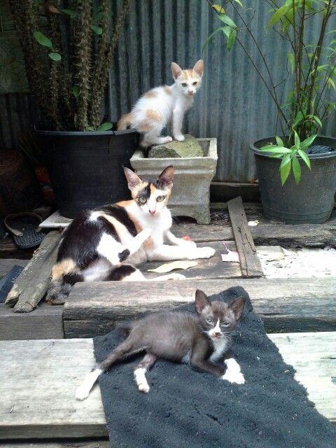 Catsy family