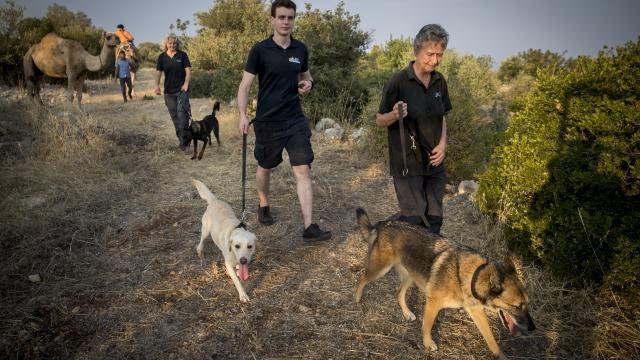 Zoektocht met honden naar vermiste Joey in Turkije mogelijk uitgesteld   NU - Het laatste nieuws het eerst op NU.nl