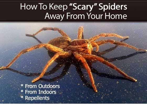 33 best images about spiders spiders spiders on pinterest
