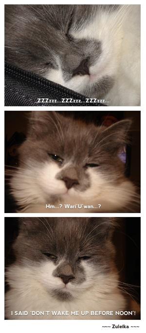 Sometimes my cat has a bad temper... :)