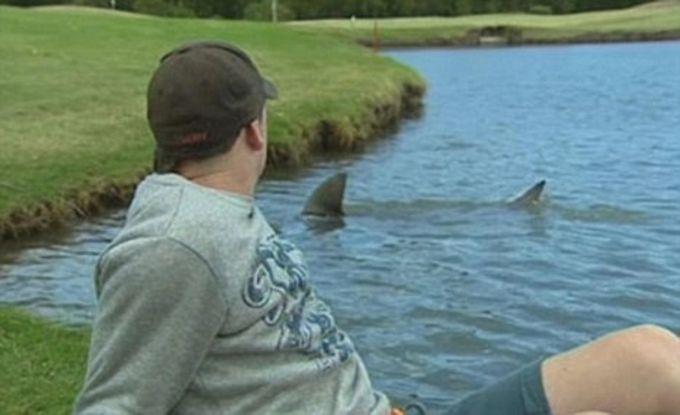 12. А это наблюдали на поле для гольфа в Брисбене, Австралия.