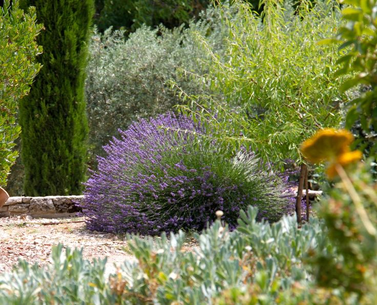 jardin d'été  夏の庭