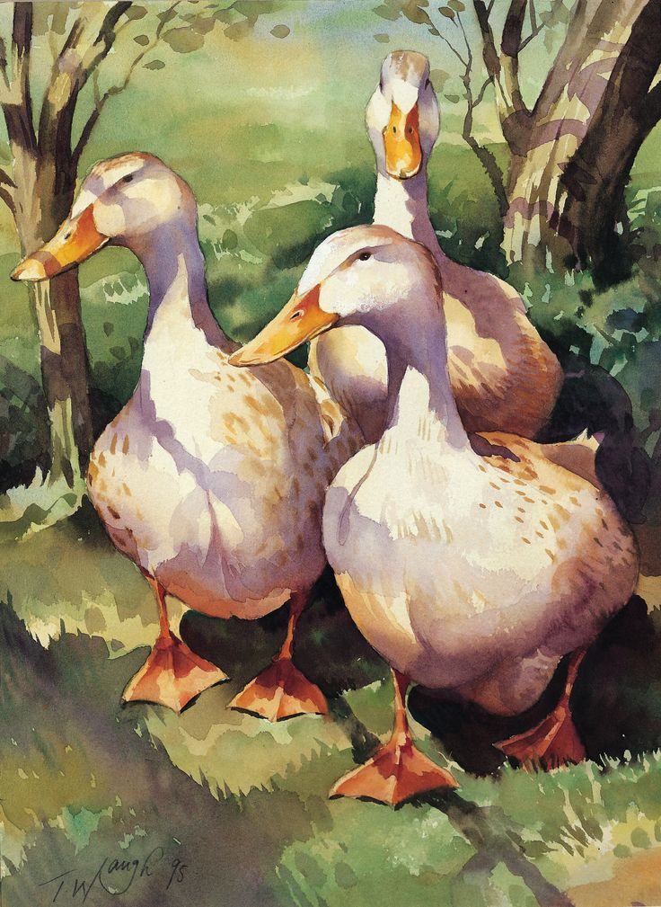 """Silver Appleyards"" Watercolour by Trevor Waugh ©"