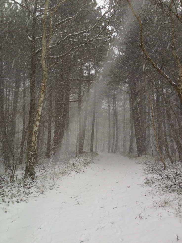 Snowstorm on our Island!