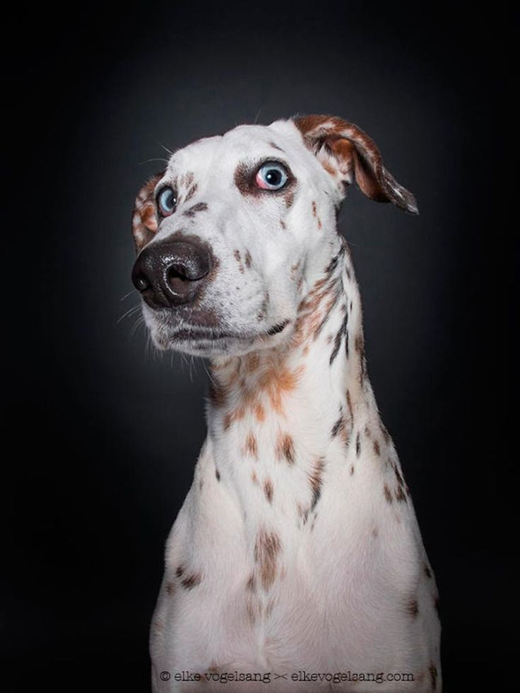Dog Portraits – When a photographer captures the personalities of dogs (image)