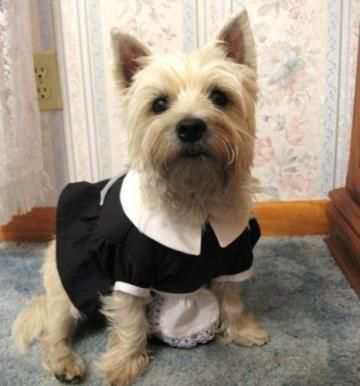 French Maid / Magenta Costume for Small to Medium Sized Dogs by NeedfulThingsofSalem for $35.00