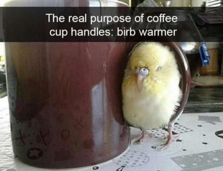 Birb Warmer Eyebleach Cute Baby Animals Funny Birds Cute Animal Memes