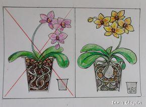 Успешный уход за орхидеями - Посадка и пересадка орхидей © Inna Liapin