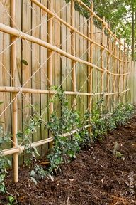 With a trellis inside the fence we could make the privacy fence taller and have it covered with growing things.