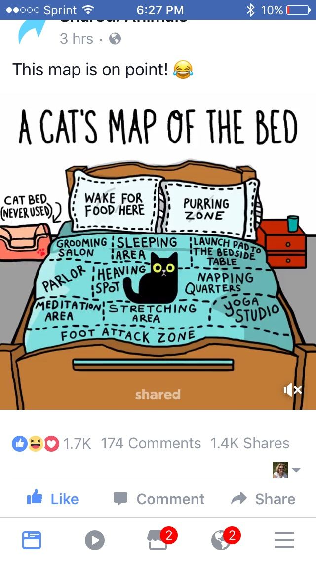 A Cat's Map of a Bed
