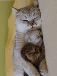 Mother Kitty and Her Babies.