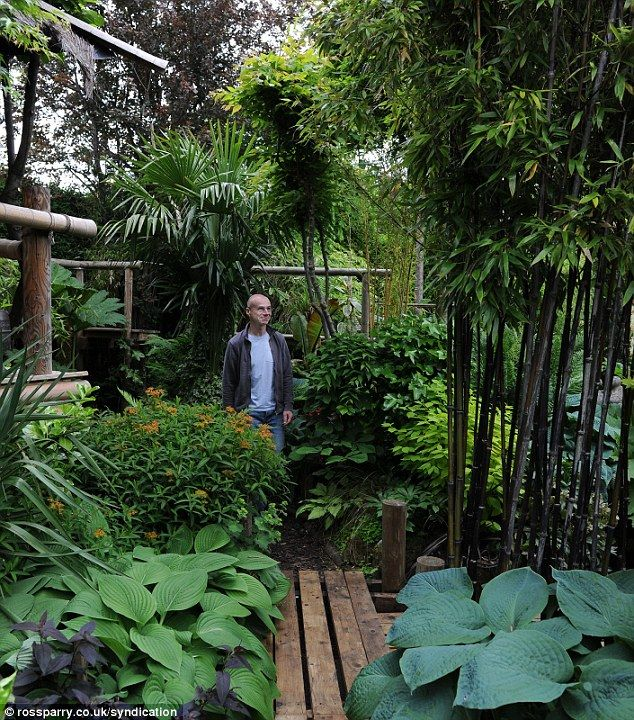 Where the wild things are: The tropical looking garden is filled with banana trees, bamboo plants and palm trees