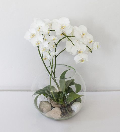 BUY NOW | Verona Orchid | Sorrento Events Online Shop