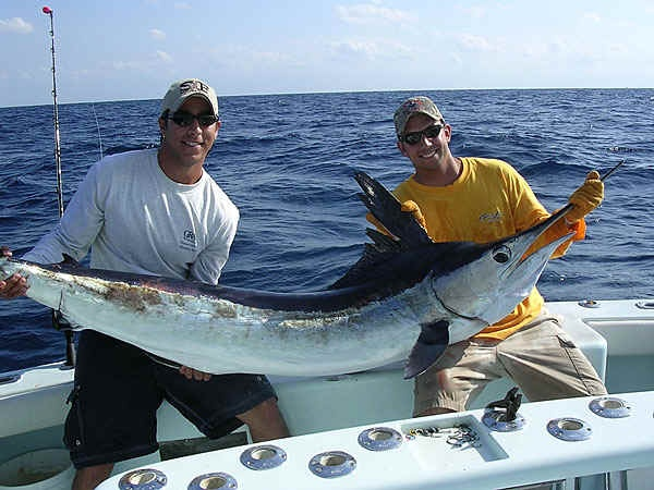 1000 images about gulf of mexico fishing on pinterest for South florida fishing