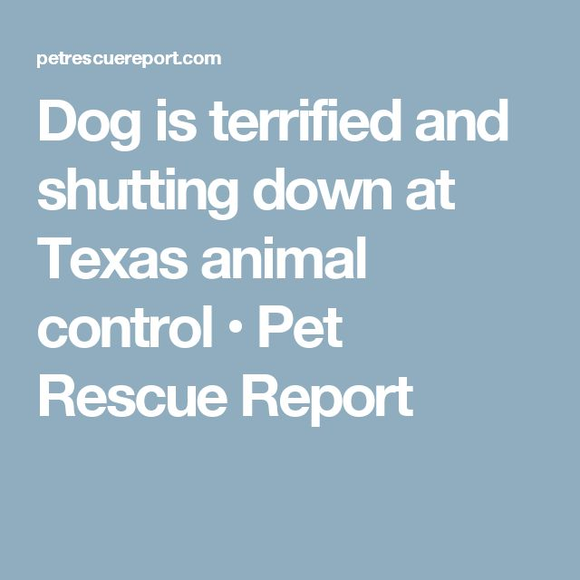 Dog is terrified and shutting down at Texas animal control • Pet Rescue Report