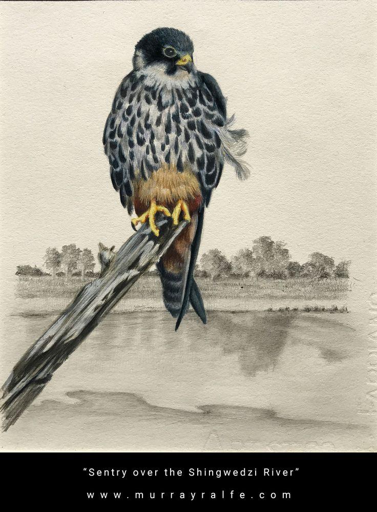 "Title: ""Sentry over the Shingwedzi River"" Medium: Watercolour Painting Depiction: Lanner Falcon Artist: Murray Ralfe"