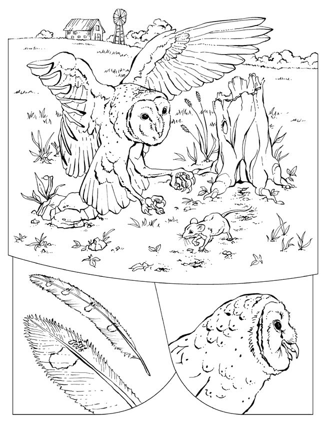 Barn Owl Color Page Print This Free Coloring Sheet And Craft Your Own Animal Book