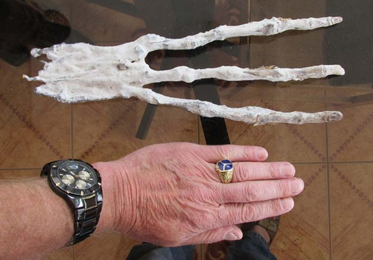 Bizarre 3-Fingered #Mummified Hand Found in A Tunnel in the #Peruvian Desert