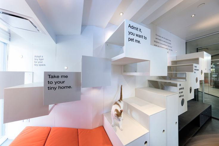 Best Friends Animal Society Gets a State-of-the-Art Space in NYC - Design Milk