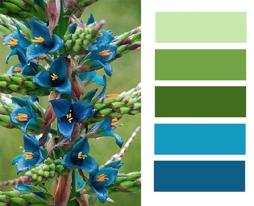 green and blue palette @margaretinva thanks for finding this one :)