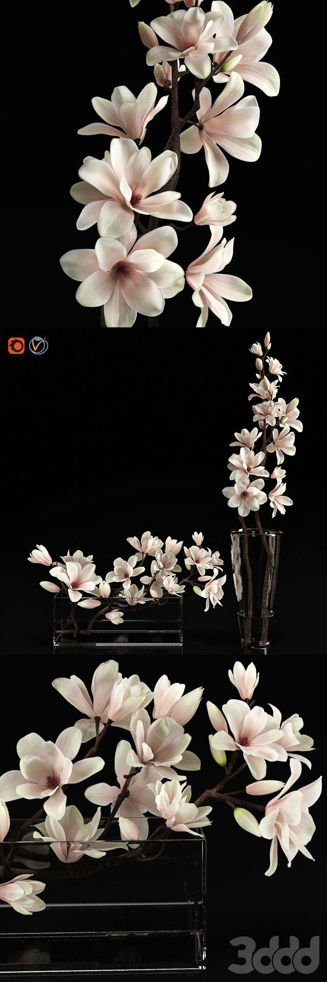 3d модели: Растения - Magnolia 2