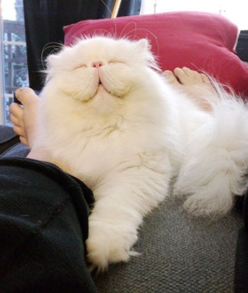 Best Cute Kitty Kats Images On Pinterest Kitty A Smile And - 25 of the fluffiest cats ever