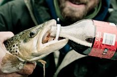 Chug a Coke, Save a Bleeding Fish. | Fly Fishing | Gink and Gasoline | How to Fly Fish | Trout Fishing | Fly Tying | Fly Fishing Blog