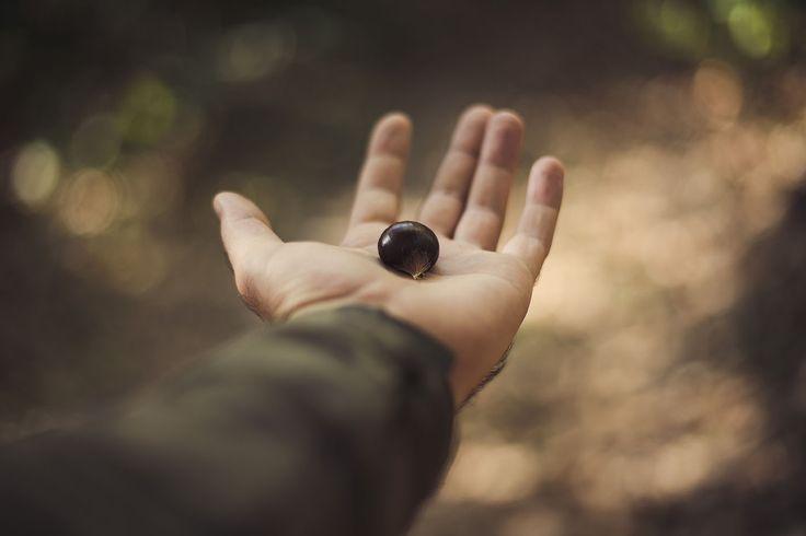 Chestnut In Hand - http://www.splitshire.com/chestnut-in-hand/