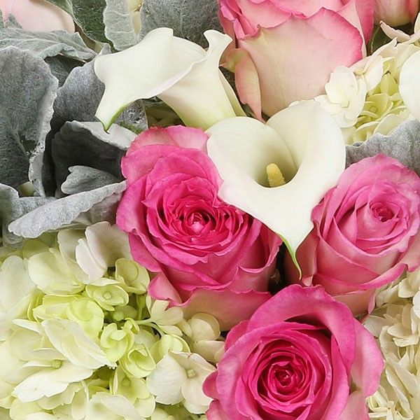 15 pink and hot pink roses accompanied by 10 calla lilies and surrounded by fresh white hydrangeas and silvery dusty miller leaves. This charming flower synthesis resembles nature's most calming and serene scenery. Flamingos & Doves - Roses Calla Lilies Hydrangeas - Flower Delivery NYC - plantshed.com