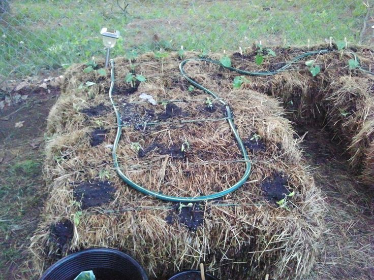 info on straw bale gardening, curing the hay prior to planting and using a tarp to warm the soil prior to planting