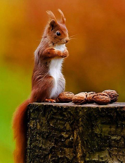 "Squirrel, ""Are these all for me?"""