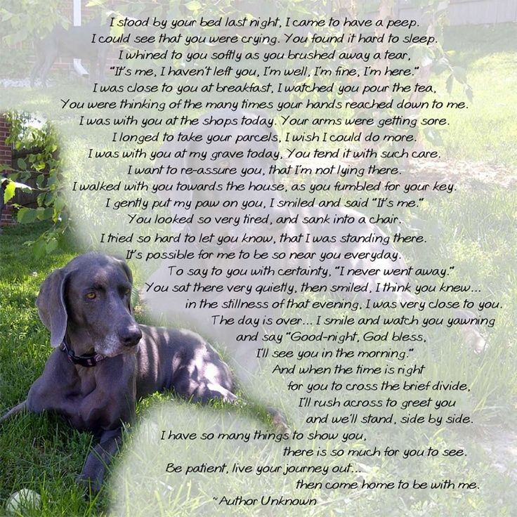 365 Best Dog Heaven And Pet Loss Images On Pinterest Pets Dog Loss Quotes And Pet Quotes
