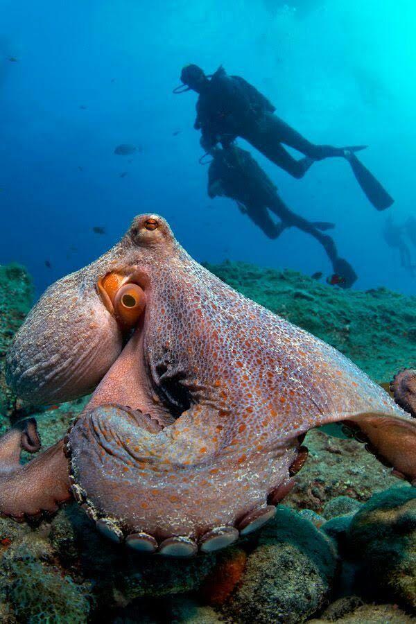 Pin By Joleen Pero On Creatures Under The Sea Ocean Animals Ocean Creatures Octopus