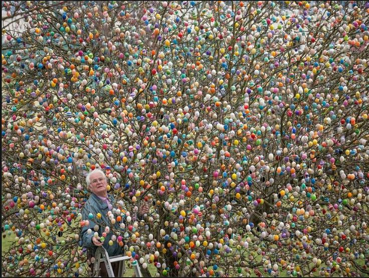Volker Kraft hung 10,000 colored eggs in his apple tree this week in Saalfeld, Germany.  Volker and his children and grandchildren have been making these eggs by hand for almost 50 years. It takes 2 weeks to decorate and 1 week to remove them. About 1,000 of them have been crocheted.  http://www.eierbaum-saalfeld.de/?seite=home&lang=eng
