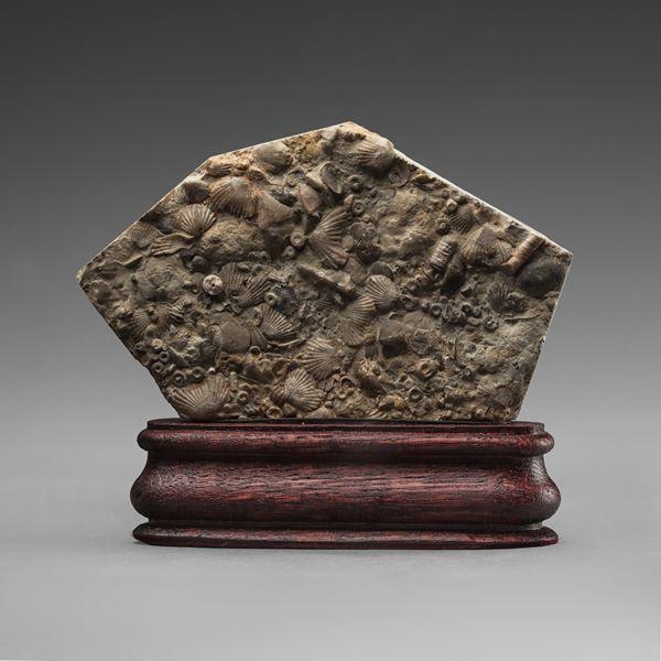 Thanatocoenoses Ordovician Sea.-Mineral`s collection