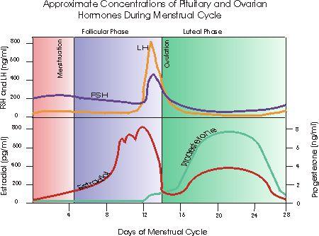 Common Signs of Progesterone Deficiency