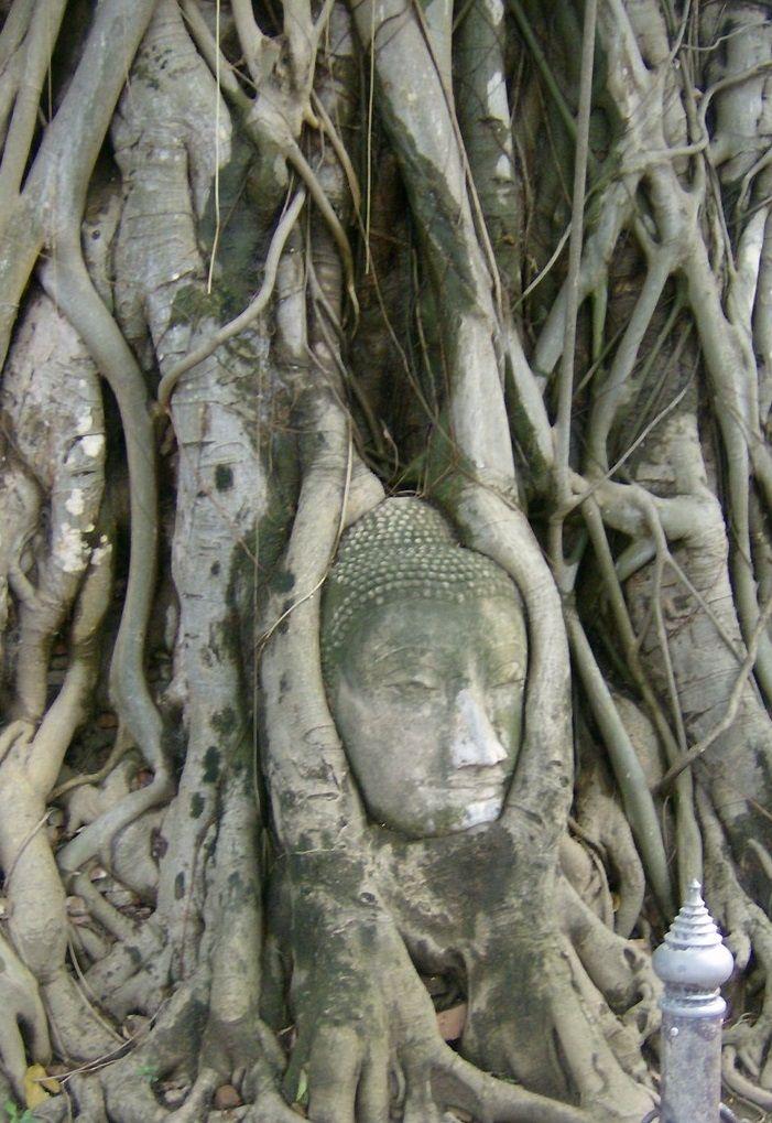 Vamos conhecer Ayutthaya, a cidade antiga perto de Banguecoque? http://www.viajarpelahistoria.com/ayutthaya-antiga-capital-reino-siao-tailandia/