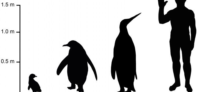 Penguin paper_media_height guide_2