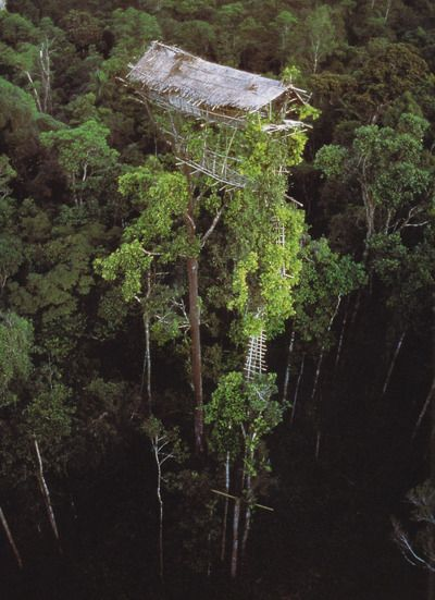 "New Guinea - ""The houses of Irian Jaya's Kombai and Korowai people are built as high as 150 feet to see the birds and the mountains and to stop sorcerers from climbing the stairs."