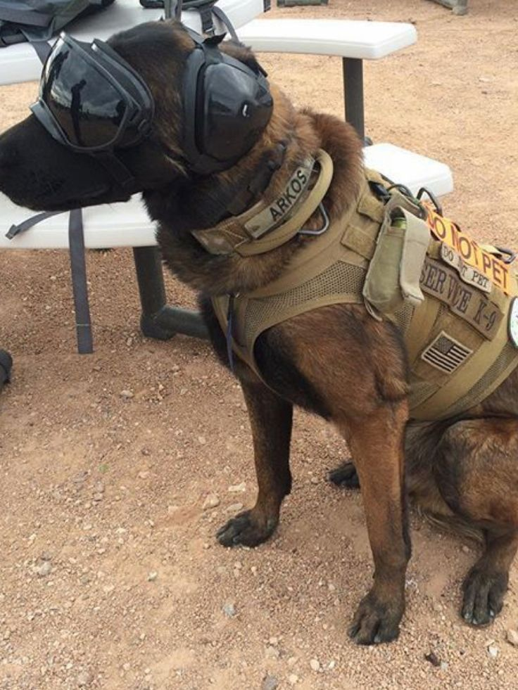 Military War K9 Hero! | Puppies | Dogs, Military Dogs ...