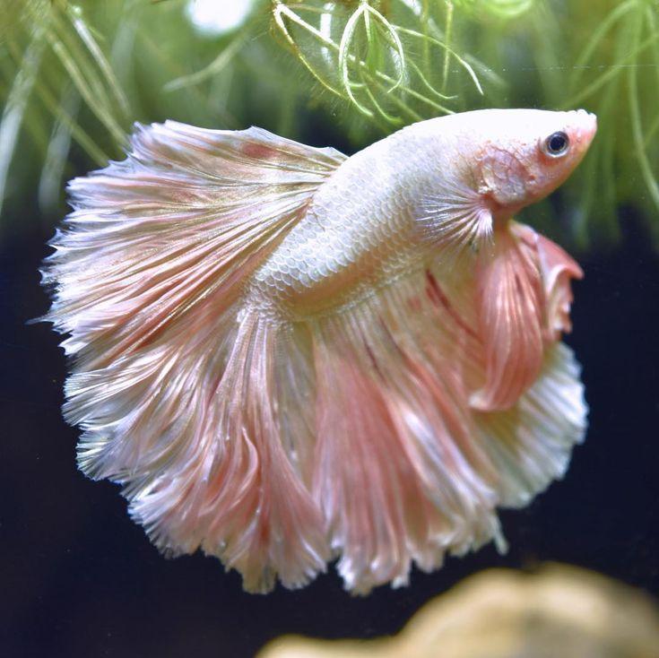 виды необычных рыб фото и названия того, ольга