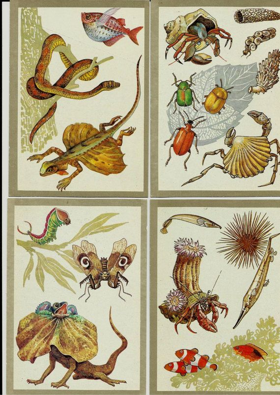 Animals, birds, plants, insects, reptiles- Vintage Russian Soviet Postcards - set of 16 by LucyMarket, $15.00