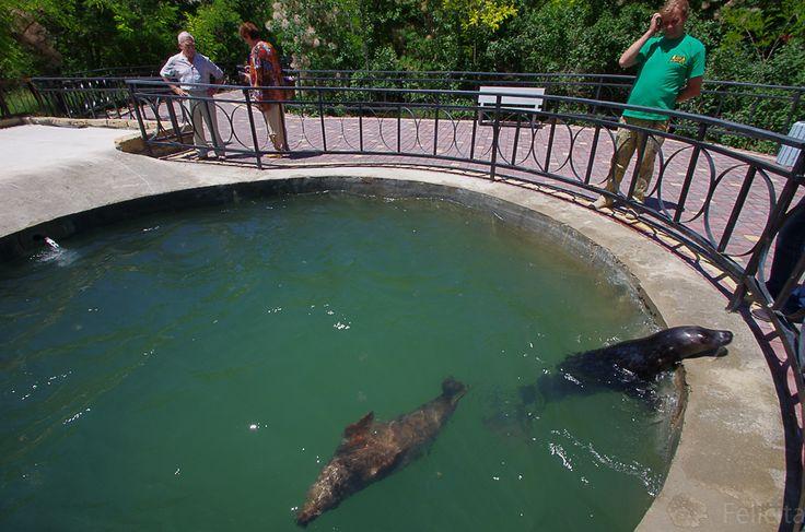 Тюлени сегодня прилетели из Калиниграда в Крым, Тайган. Директор зоопарка Олег Зубков