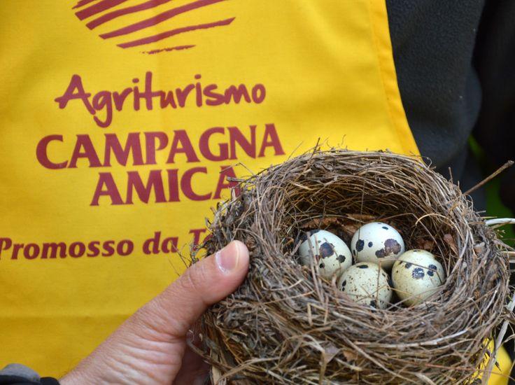 I Mercati di Campagna Amica: un nuovo rapporto tra produttori e consumatori - Girovagando in Trentino