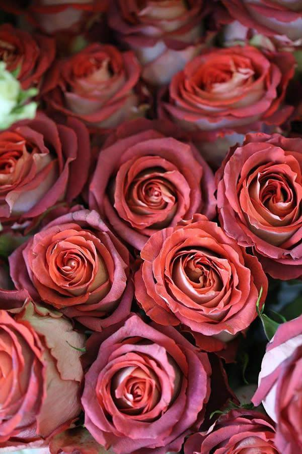12 best valentine 39 s day flowers by phillo flowers images for Buying roses on valentines day