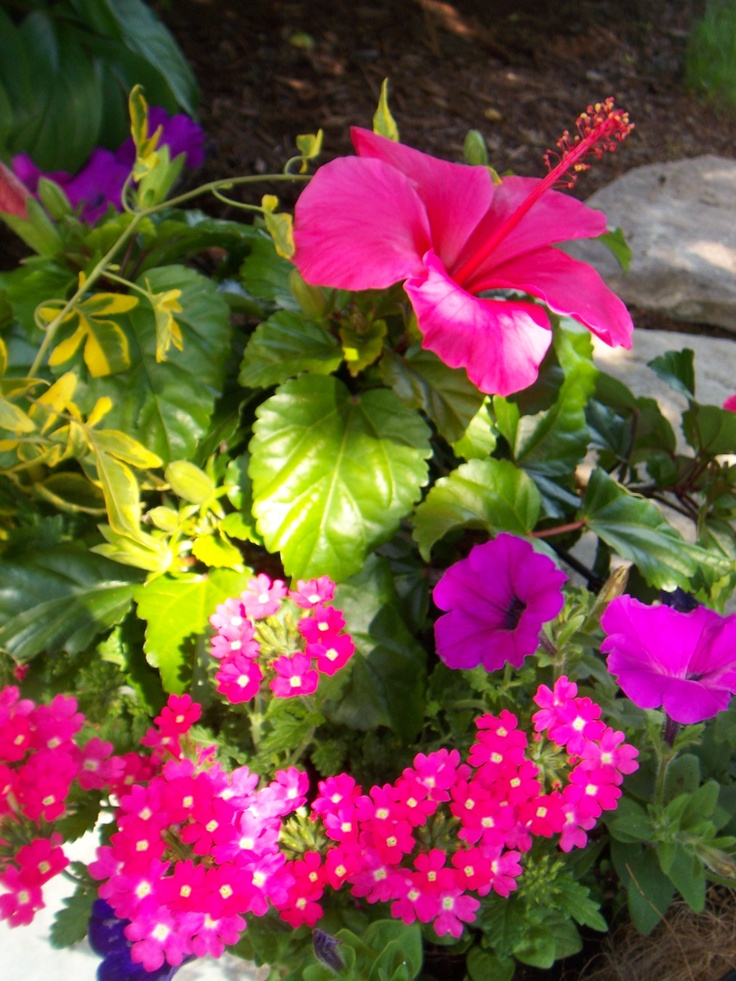 530 best images about flowers on pinterest window boxes - Wave petunias in containers ...