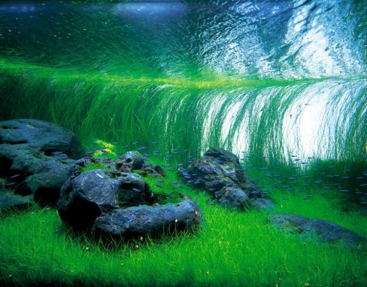 26 best aquascape design images on pinterest